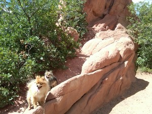 Simba and Nalla at Garden of the Gods